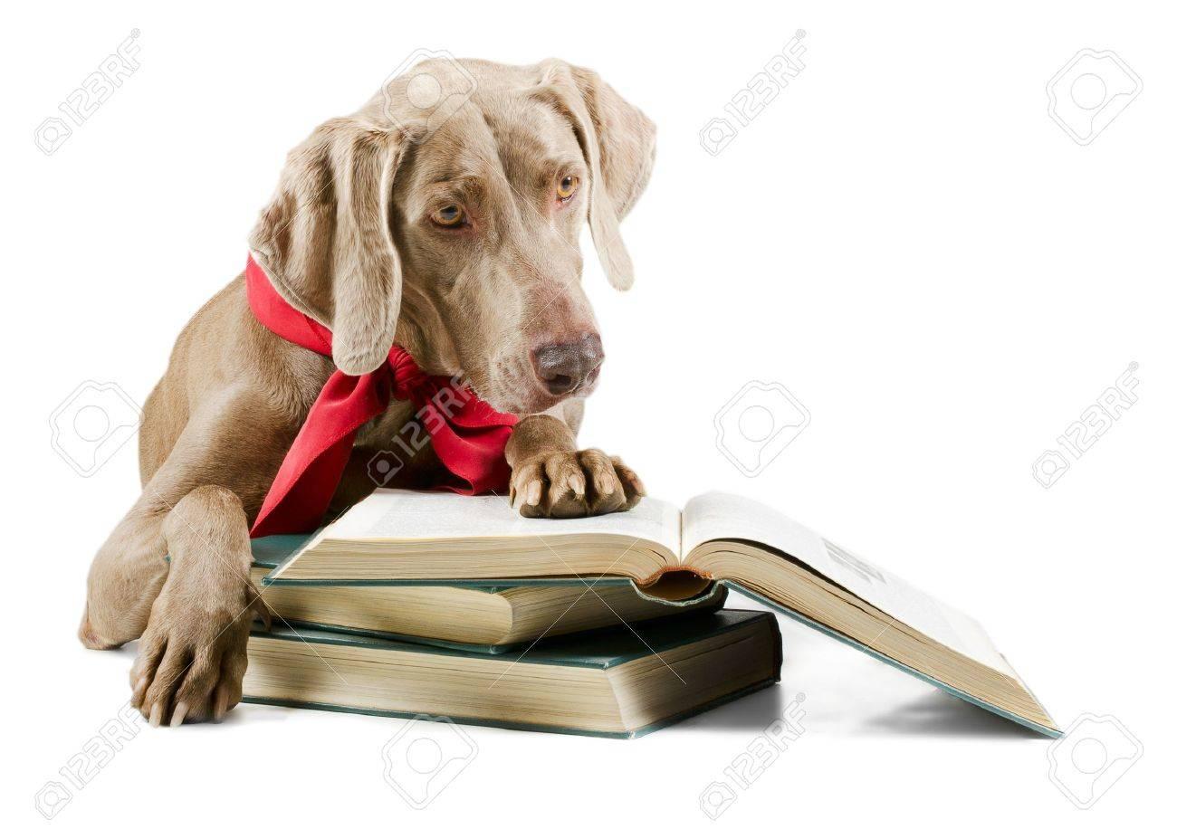 Dog reading book isolated on white background - 18115673