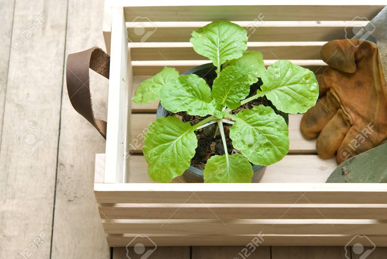 Planter Dans Une Caisse En Bois outils de jardinage et des plantes à l'intérieur de la caisse en bois