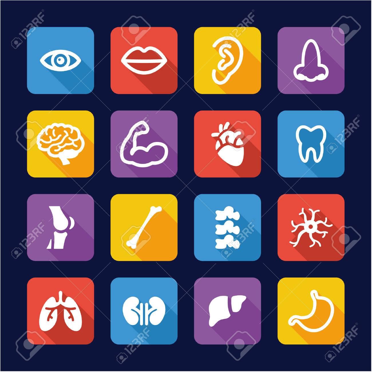 Human Anatomy Icons Flat Design - 47612795