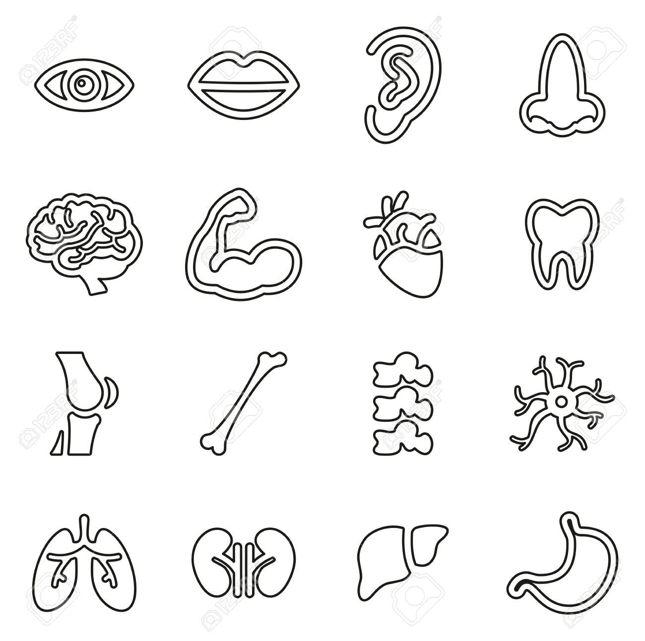 Human Anatomy Or Human Body Parts Icons Thin Line Vector