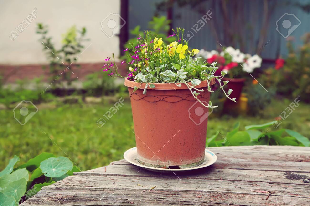 garden flowers in a ceramic pot on a wooden background - 130442949