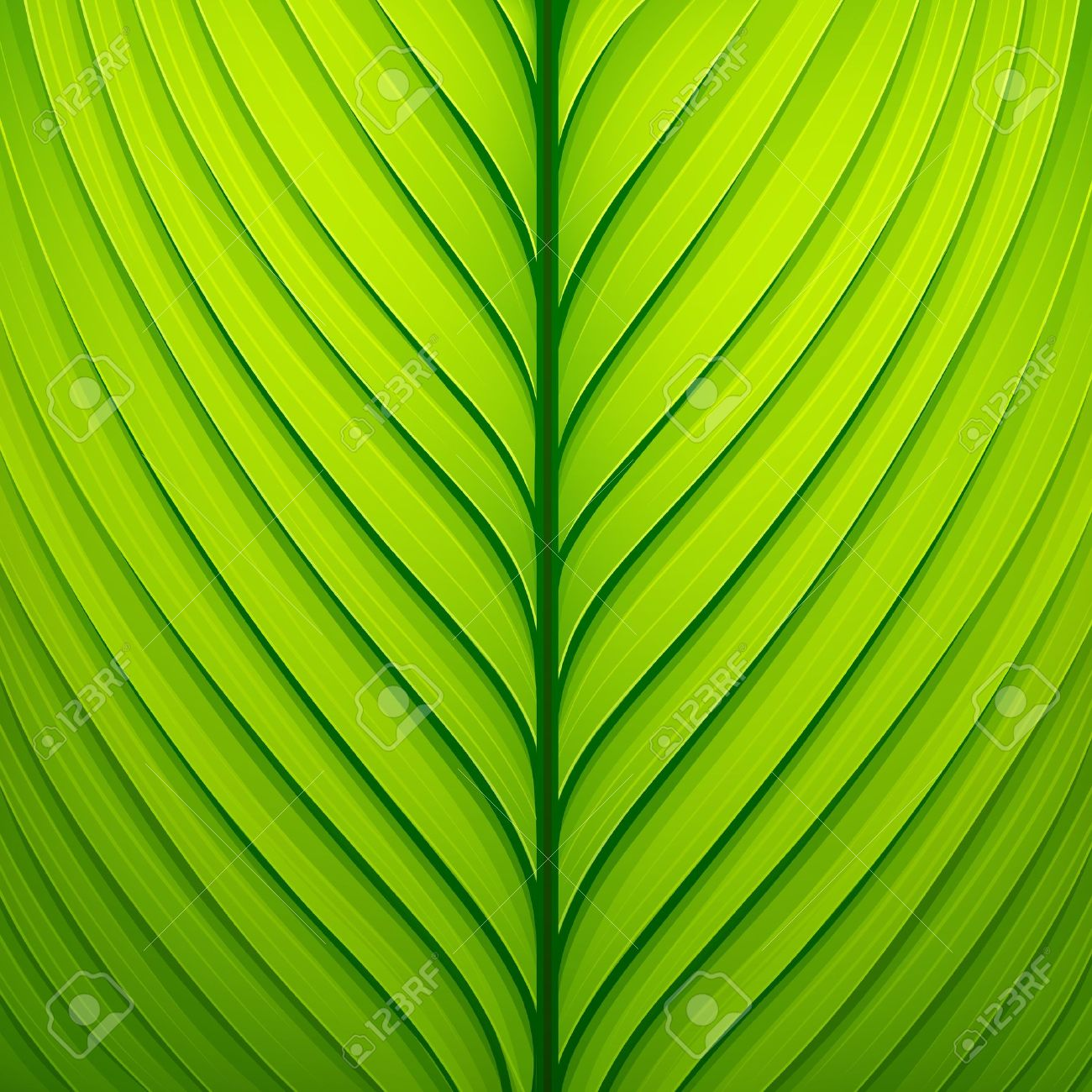 Texture of a green leaf. Stock Vector - 14813788