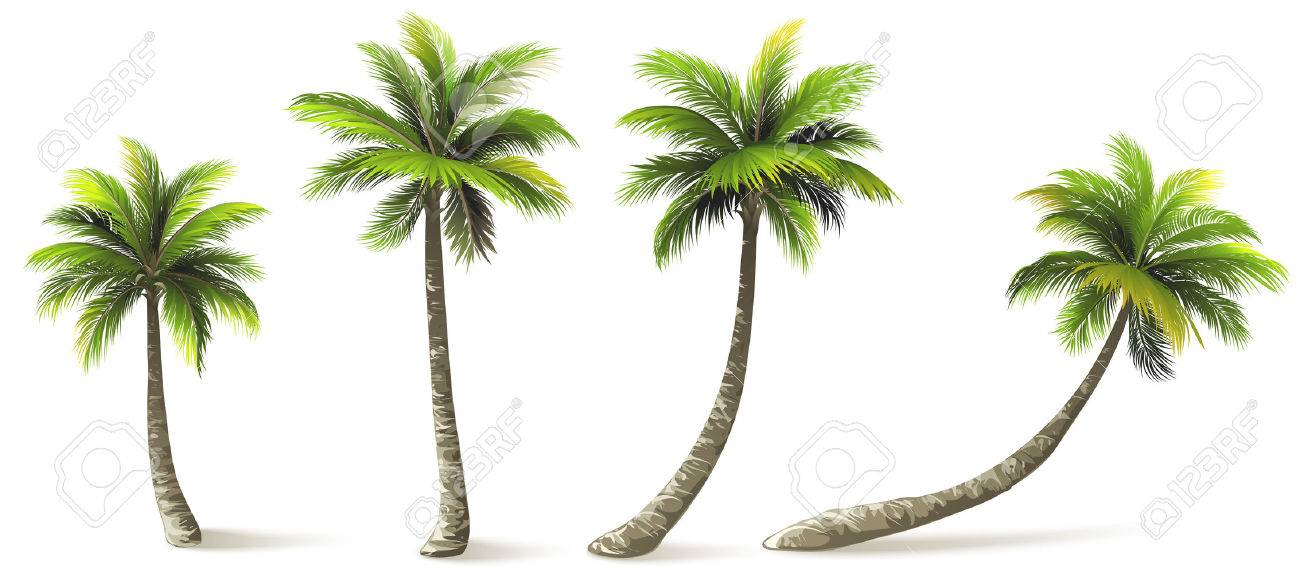 Palm trees with shadow isolated on white vector illustration palm trees with shadow isolated on white vector illustration stock vector 40273404 voltagebd Images