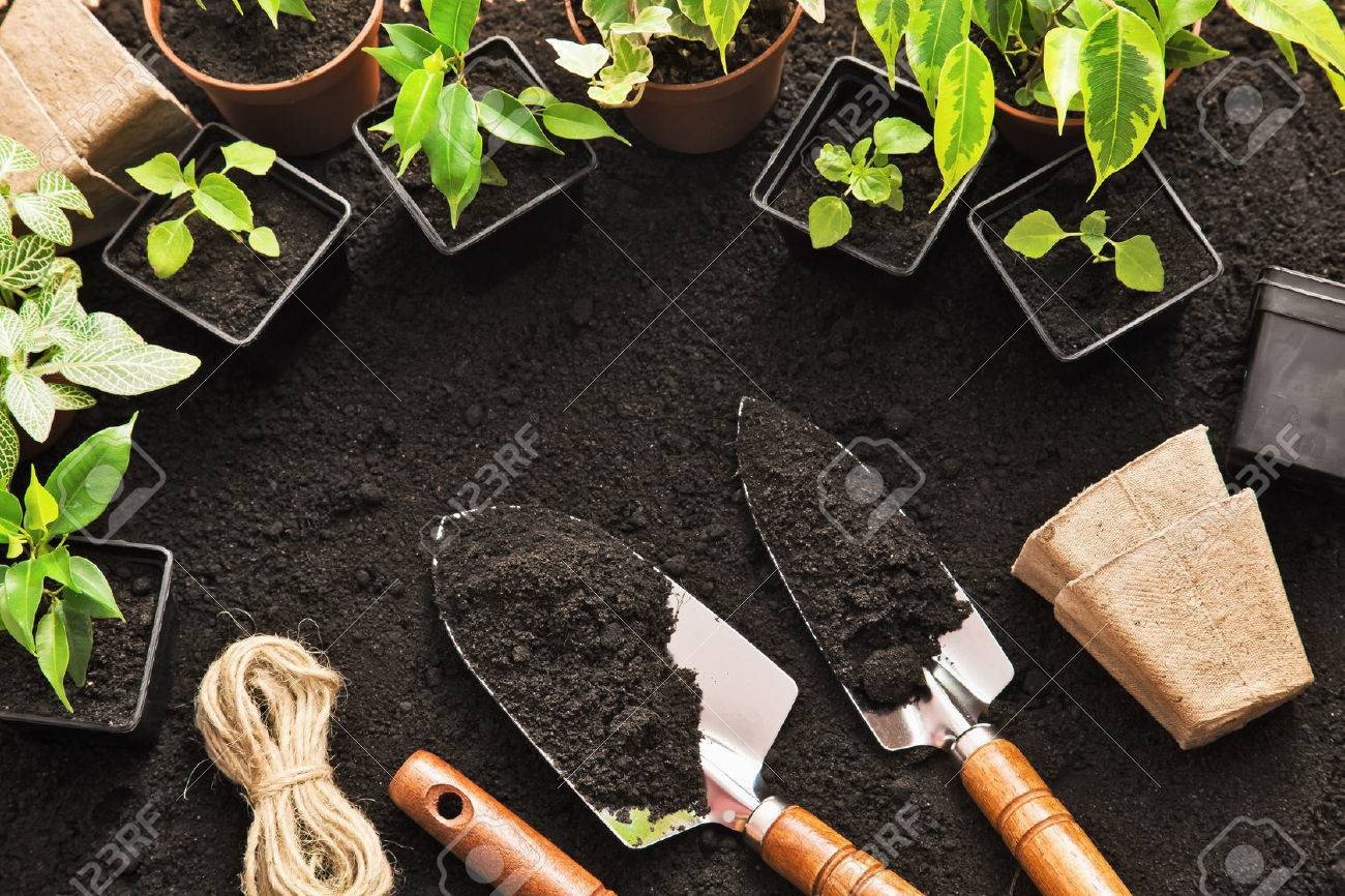 Gardening tools and plants on land Standard-Bild - 43793249