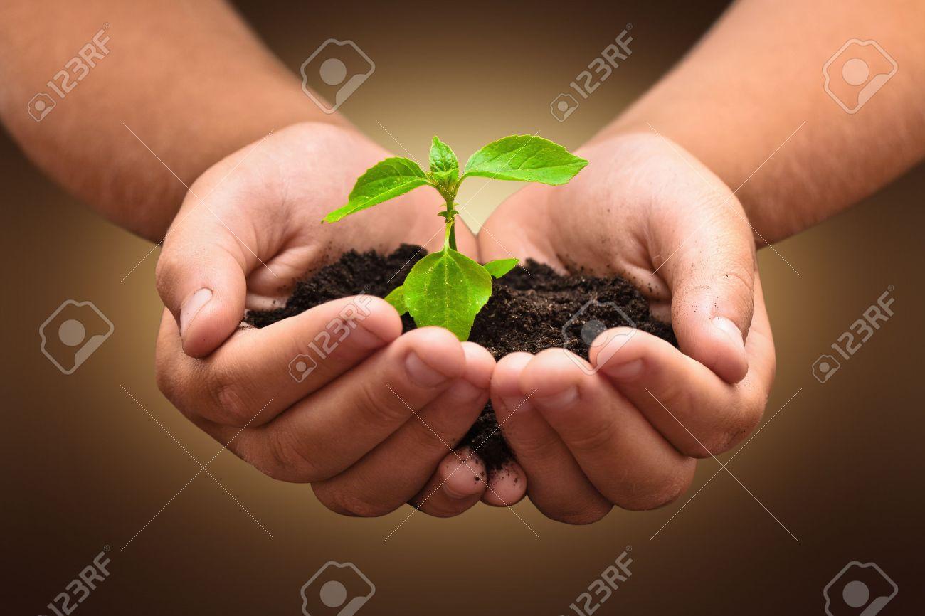 Green plant in a child hands on dark background Standard-Bild - 43790027