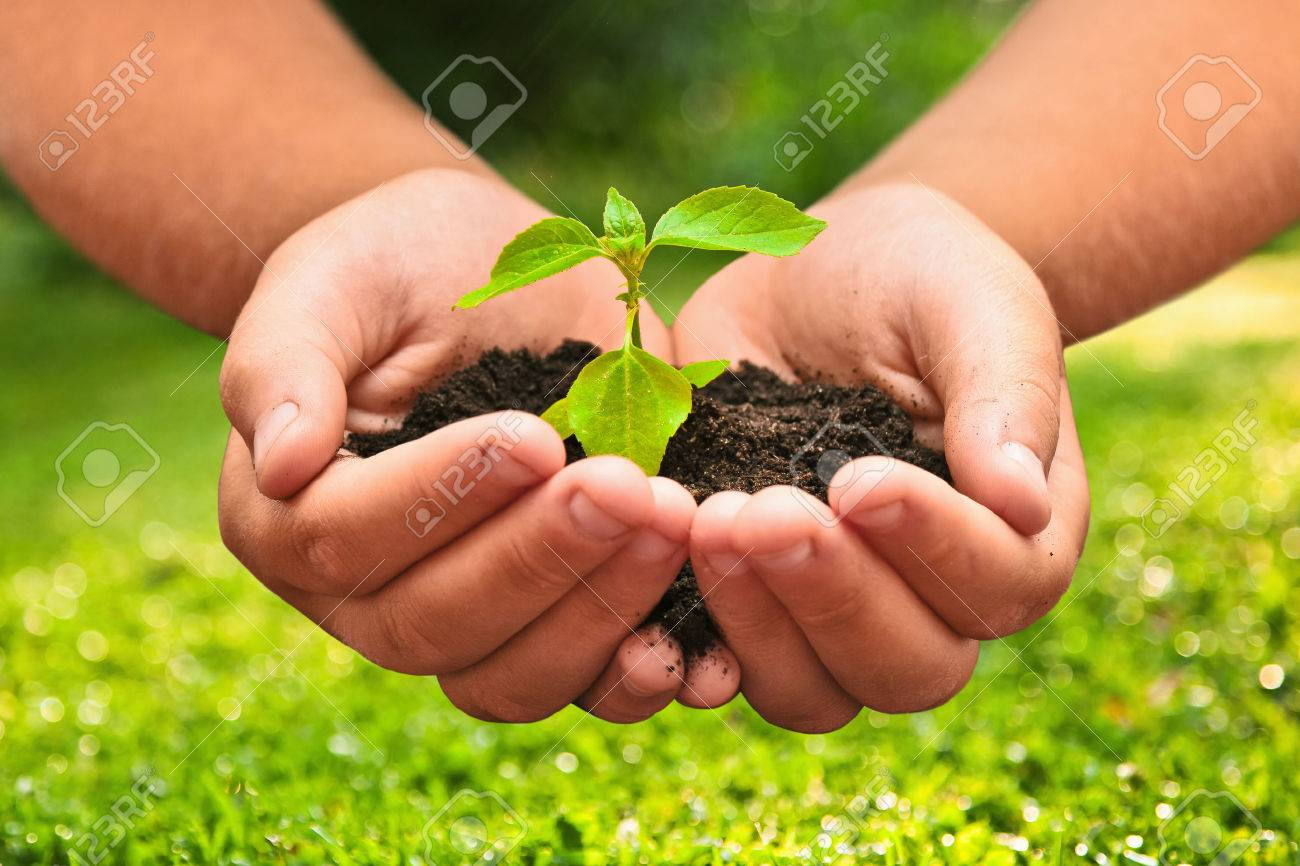 Green plant in a child hands on natural background Standard-Bild - 43784958