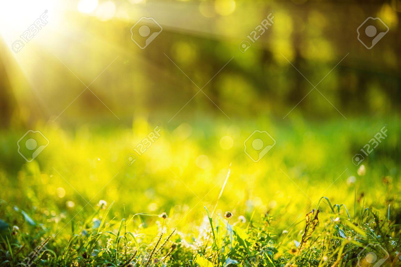Natural background with green grass and sunshine effect bokeh Standard-Bild - 60695623