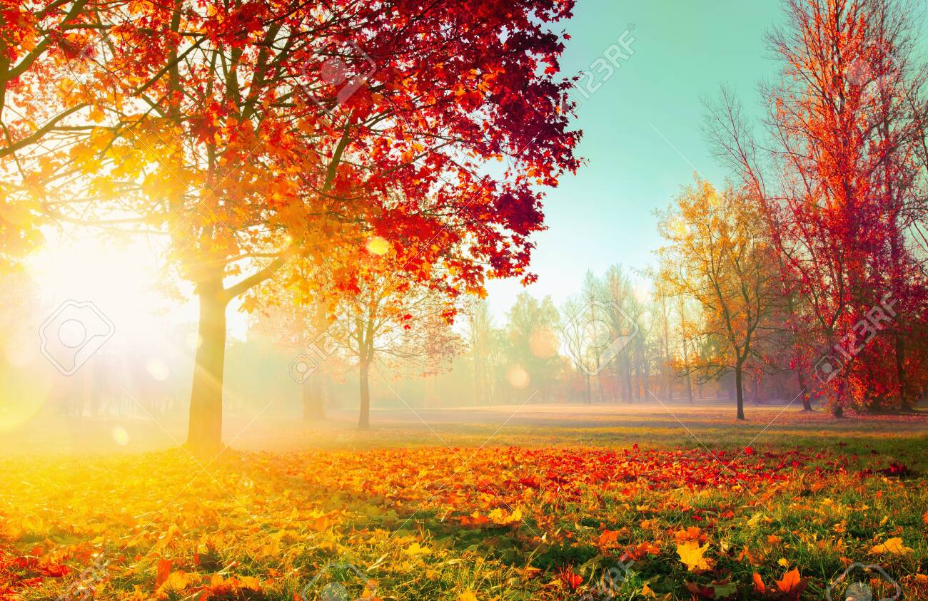 Autumn Landscape. Fall Scene. Trees and Leaves, Foggy Forest in Sunlight Rays - 127117551