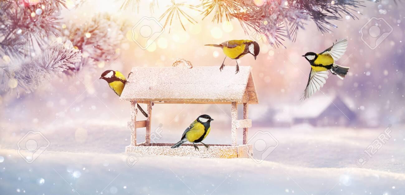 Christmas Card with Birds and Bird Feeder. Winter Sunny Landscape - 131623970