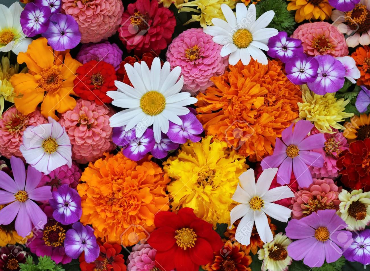 background of garden flowers, top view. Daisy, Phlox, dahlias..