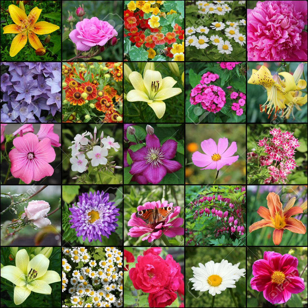 collage von fotos mit blumen. pflanzen blühen im garten. lilie und
