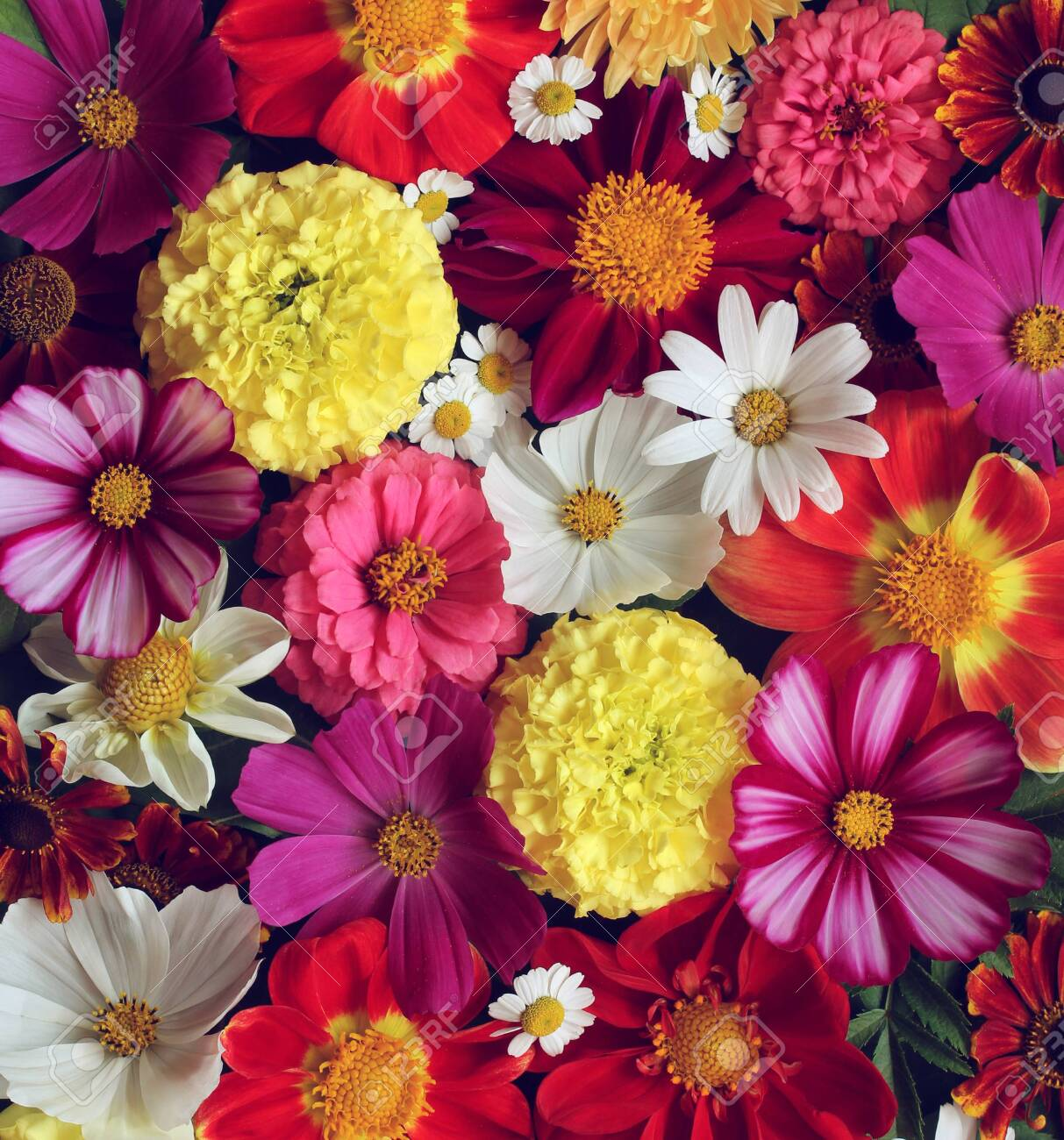 floral background, top view. garden flowers. flat lay. bright natural backdrop. - 139332688