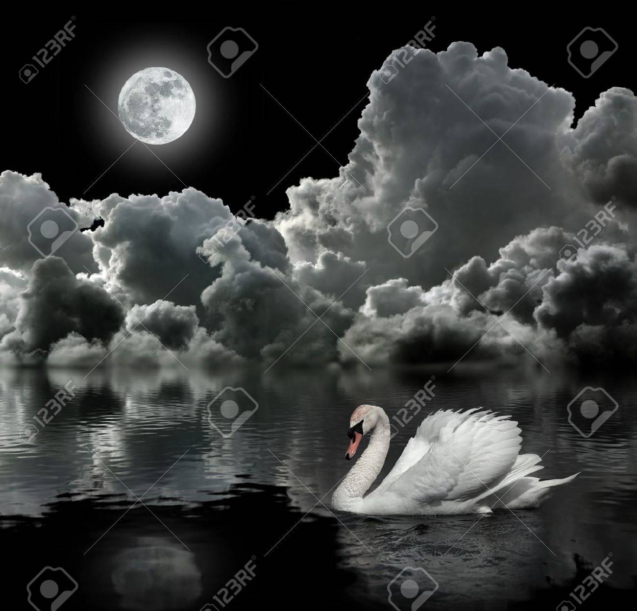 White swan at night under the moon Stock Photo - 13626608