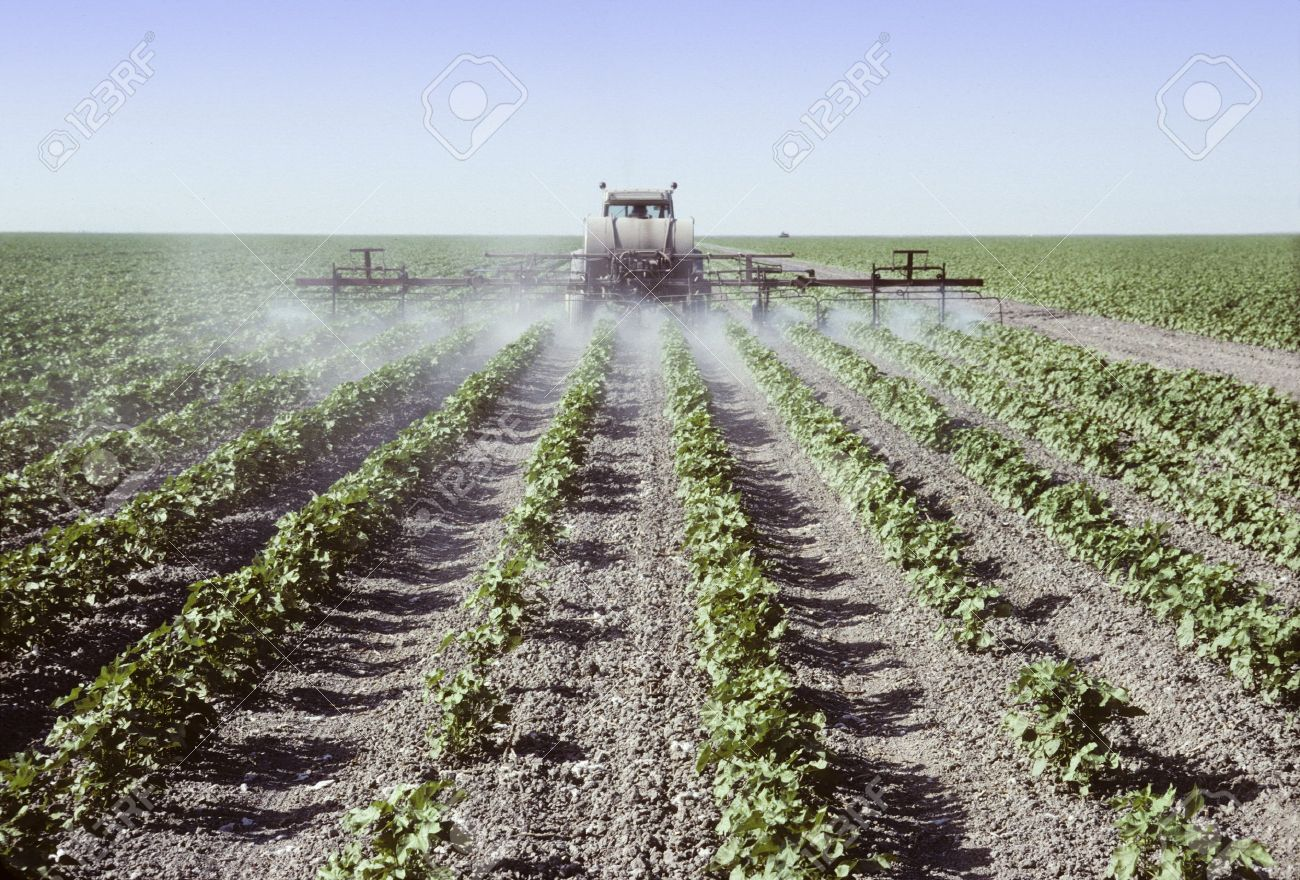 Crop sprayer spraying young cotton plants in a field in the San Joaquin Valley, California - 21399039
