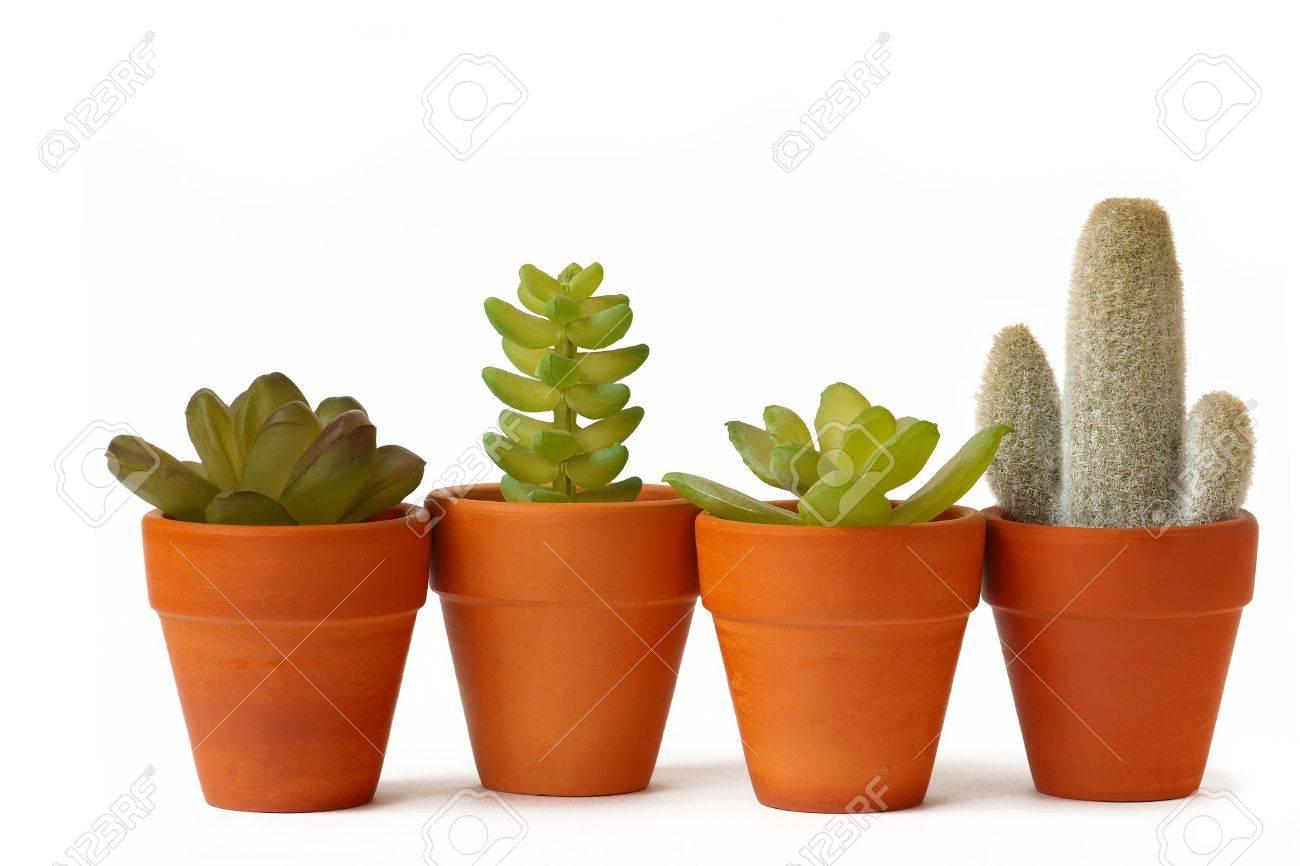 Pots of cactuses on white background Stock Photo - 16840417