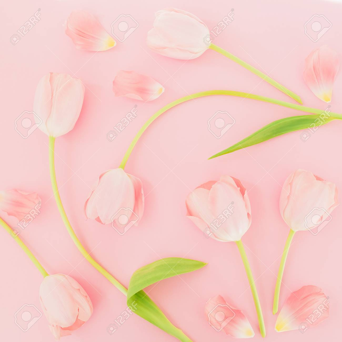 Floral Background With Tulips Flowers On A Pink Pastel Background