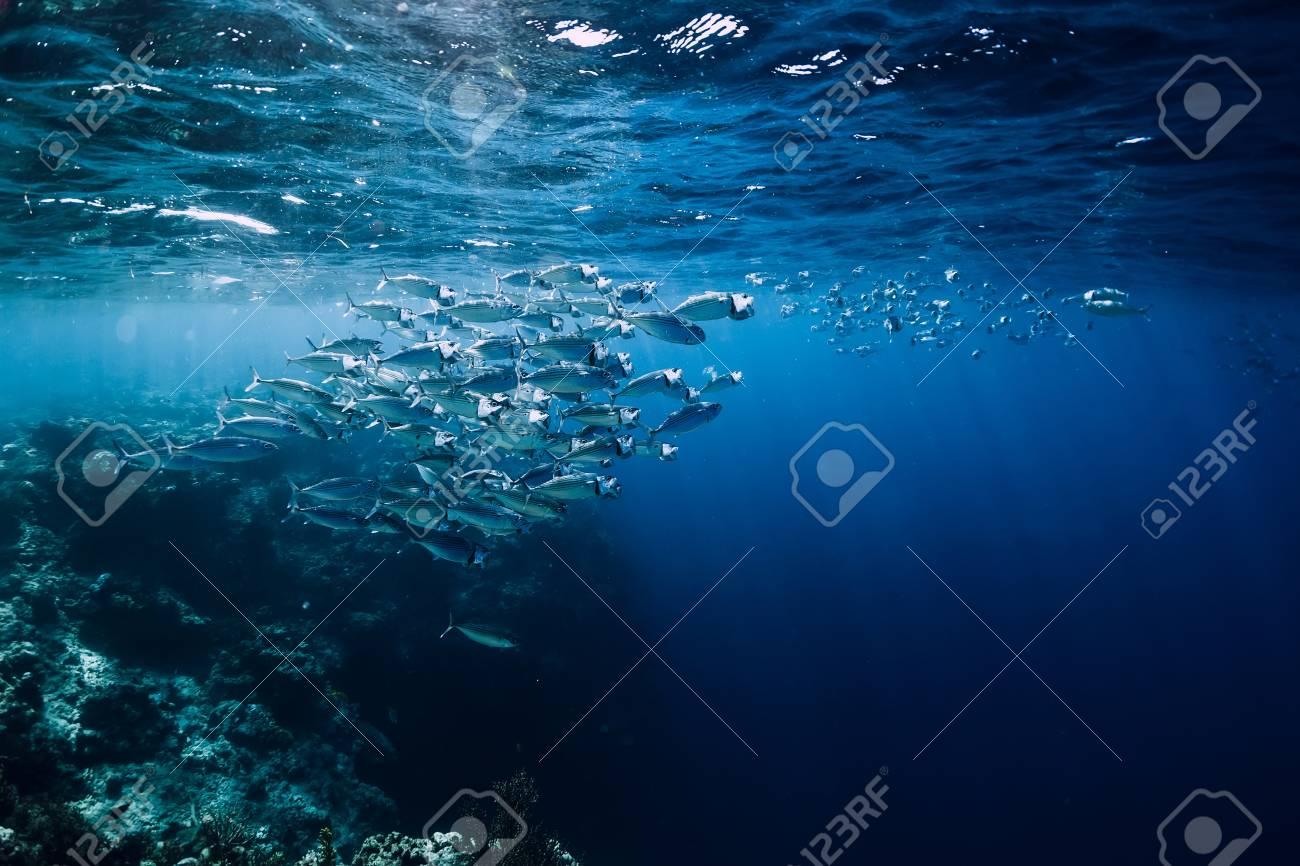Wildlife in underwater with school tuna fish in ocean at coral reef - 113844080