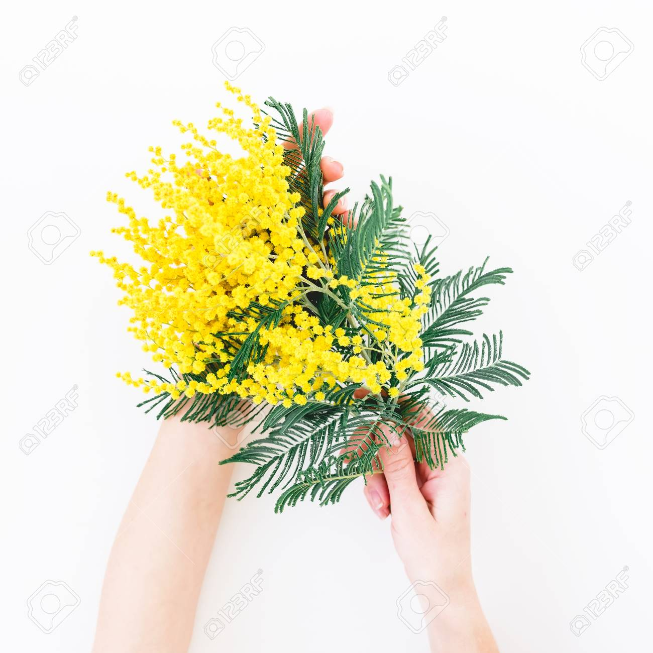 Woman Hold In Hands Bouquet Of Yellow Flower Branches On White