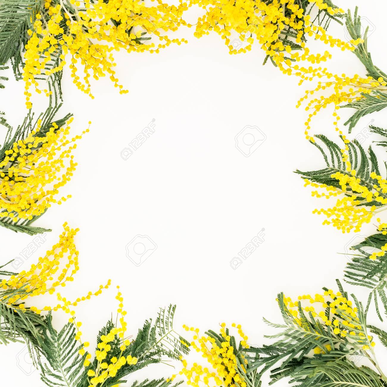 Floral Frame With Yellow Flowers Branches On White Background