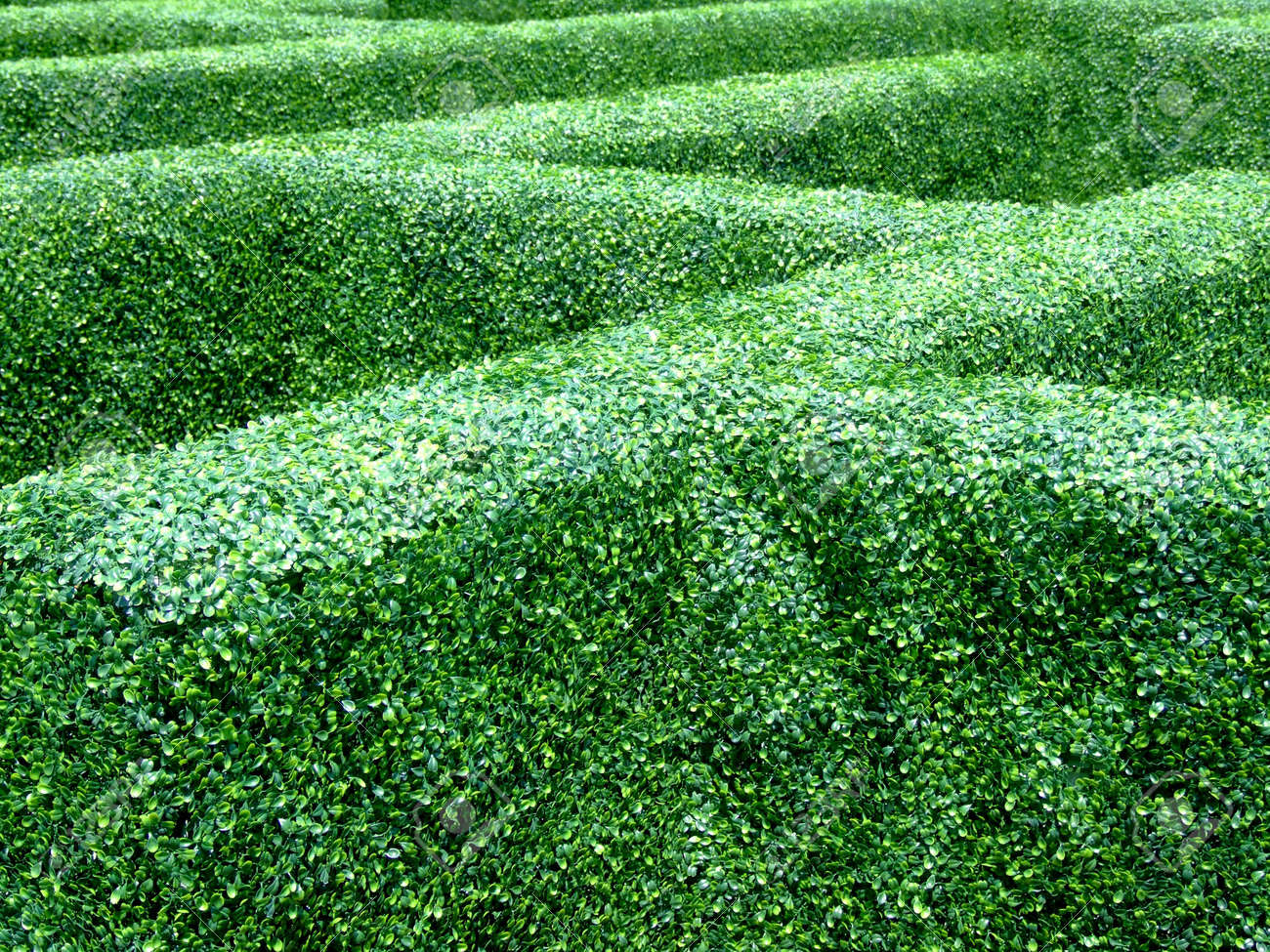 Labyrinth Made Of Bush Plants In Castle Garden Stock Photo