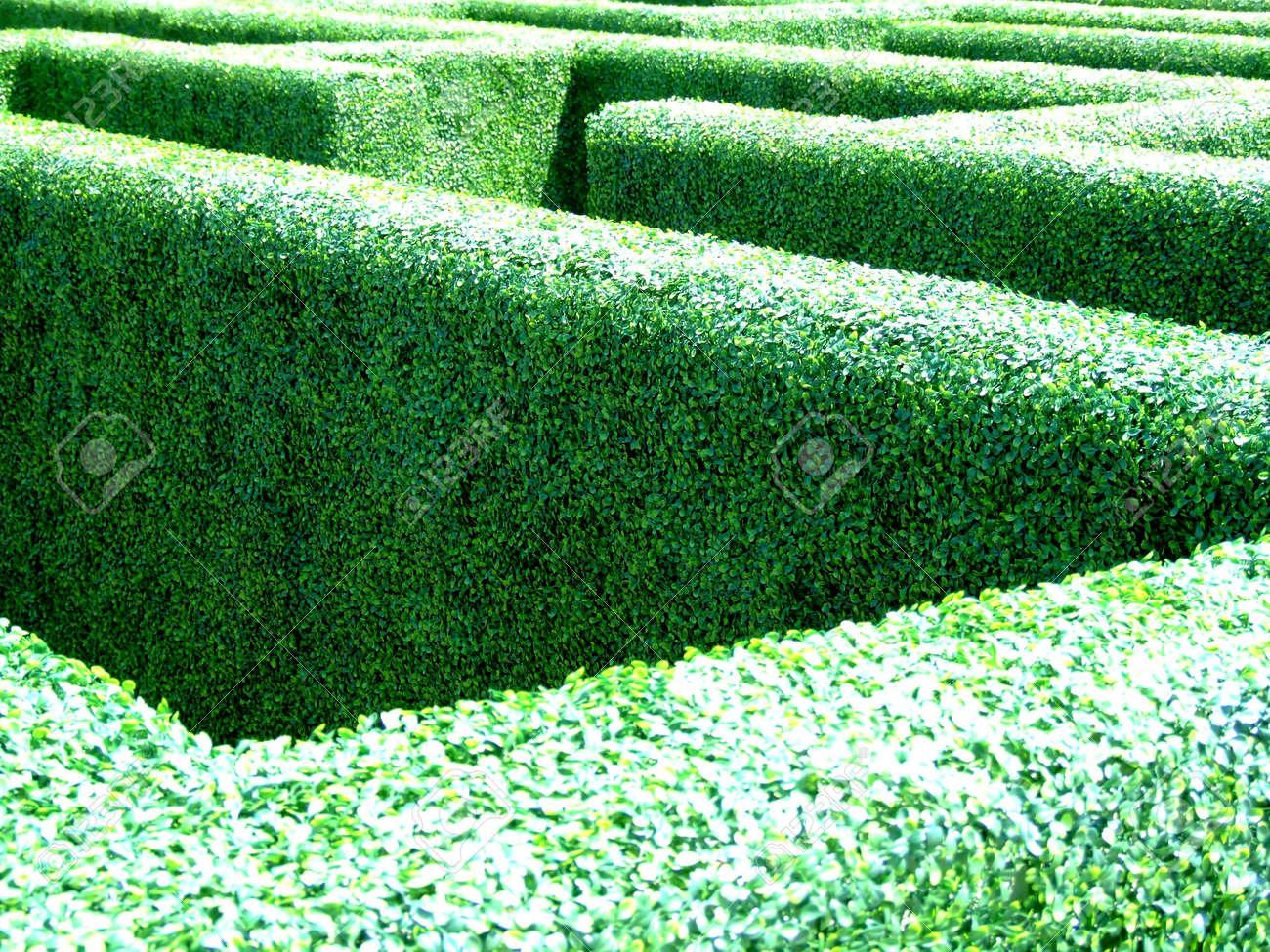Labyrinthe De Brousse Plantes Dans Le Jardin Du Château Banque D ...