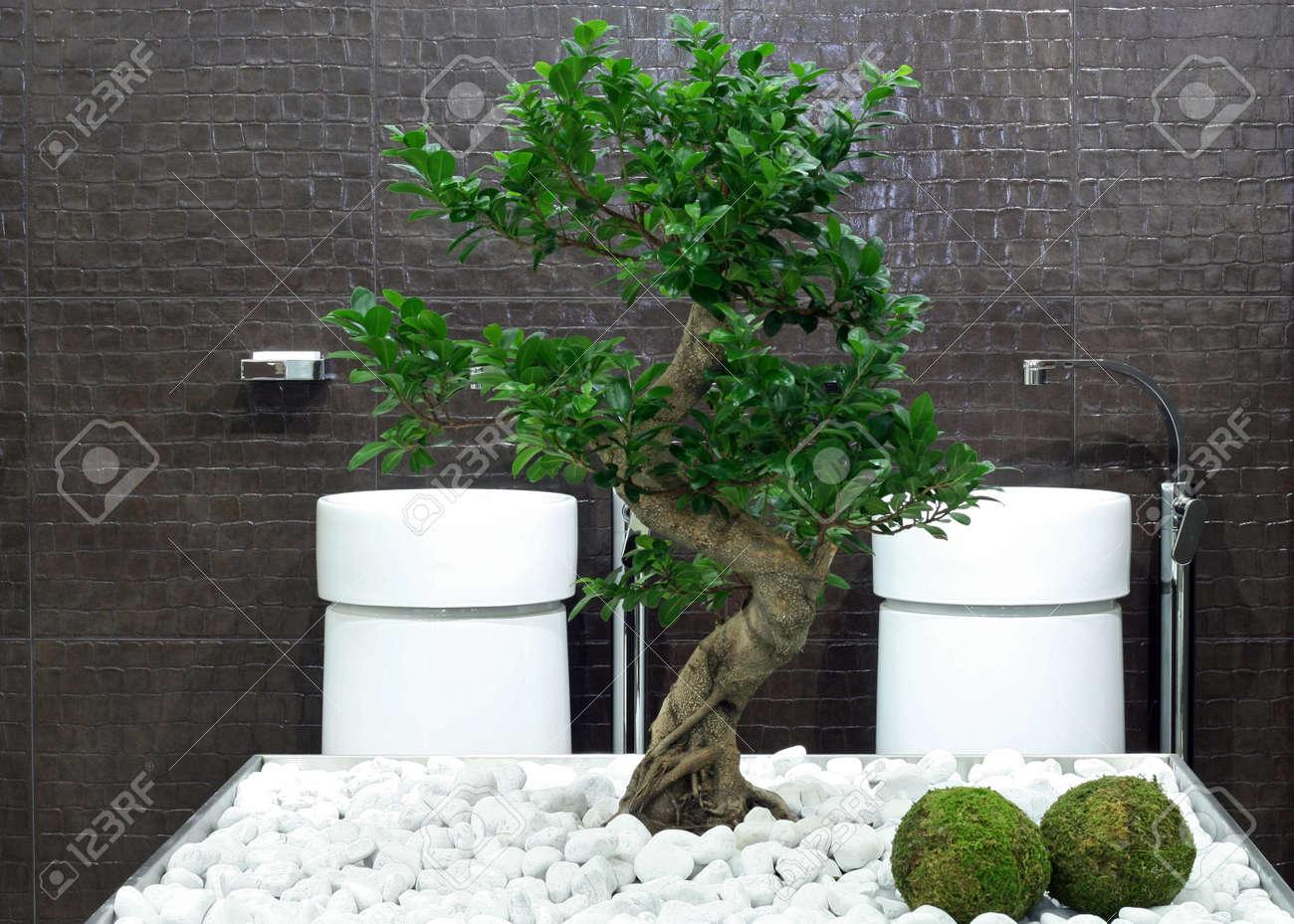 archivio fotografico stile giapponese bagno con bonsai albero e pietre