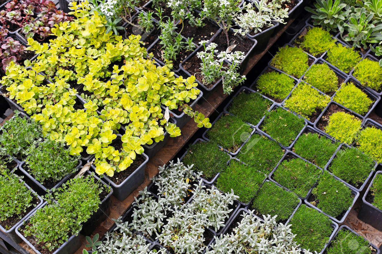 Decorative Green Plants And Seedlings Nursery Garden Photo – Nursery Garden Plants