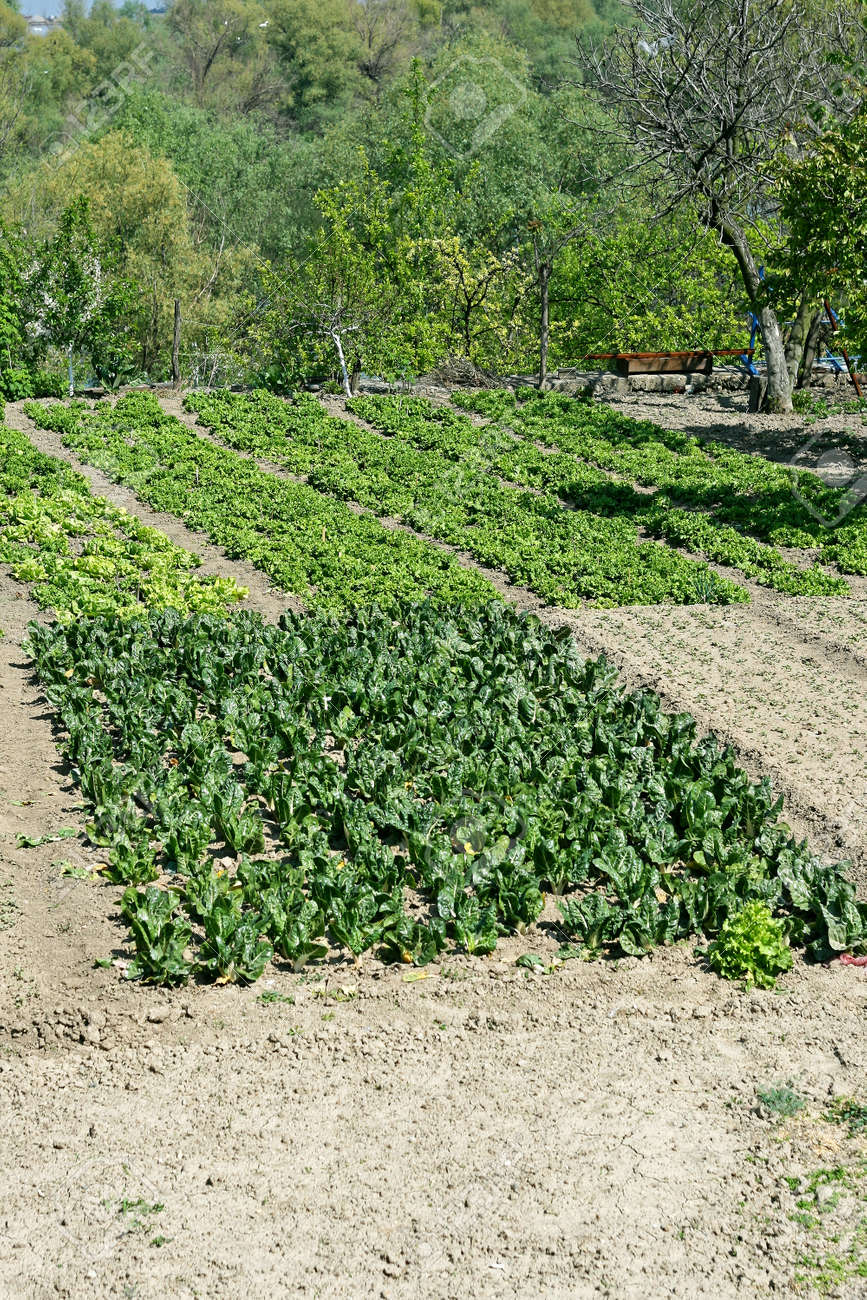Small Garden At Farm Cultivated With Organic Vegetables Stock