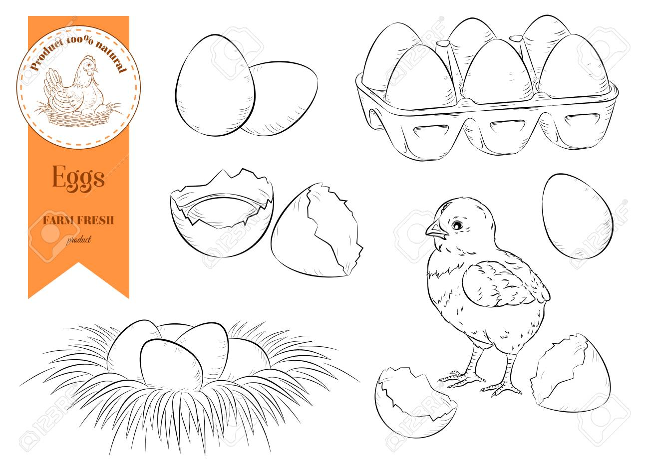 Set chicken eggs and chicken. Farm organic product. Isolated circuit. Vector illustration - 99683660