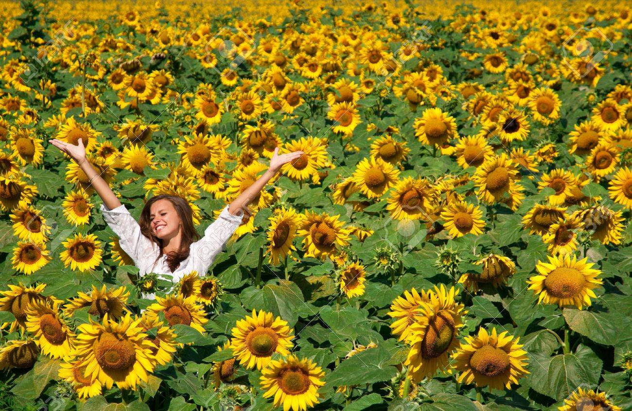 Beautiful girl on the field of sunflowers Stock Photo - 14397789