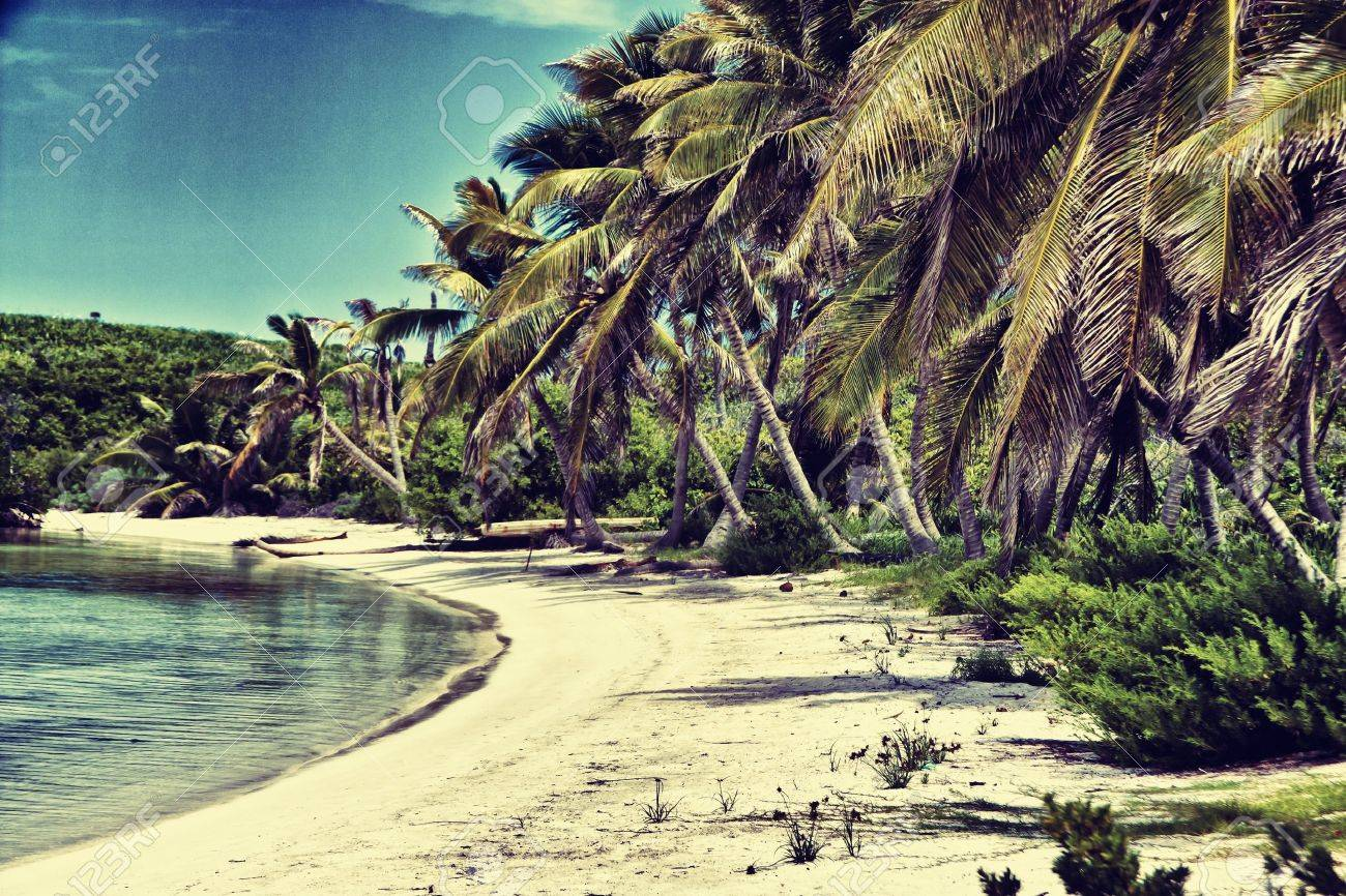 Beautiful Tropical Beach With Palm Trees Retro Standard Bild