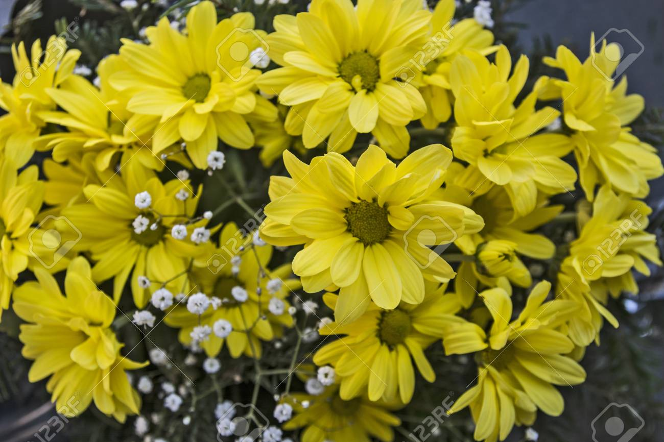 Beautiful Yellow Daisies Exposed In The Flower Shop For Sale Stock