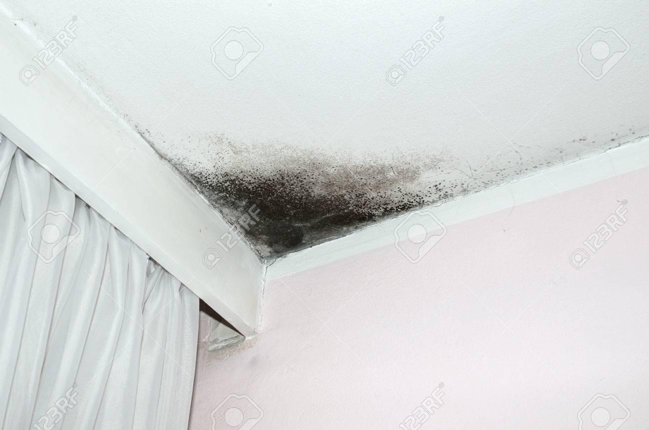 Schimmel In Der Ecke Der Weißen Decke Und Rosa Wand Mit Weißen ...