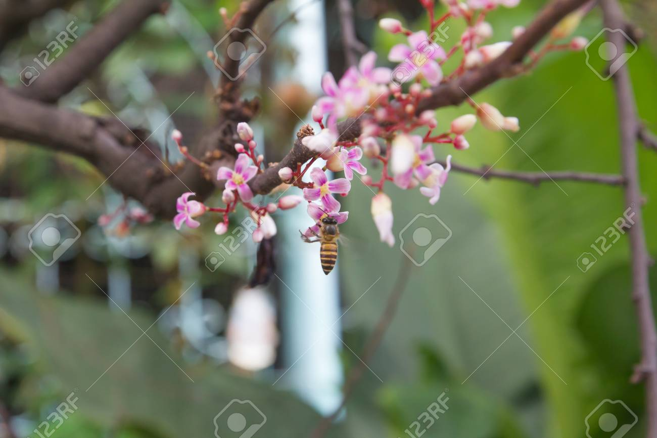 Pink Star Flower On Branch Stock Photo Picture And Royalty Free
