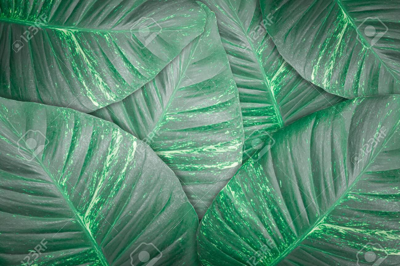 Dark Green Leaves Texture Background Tropical Leaf For Backdrop