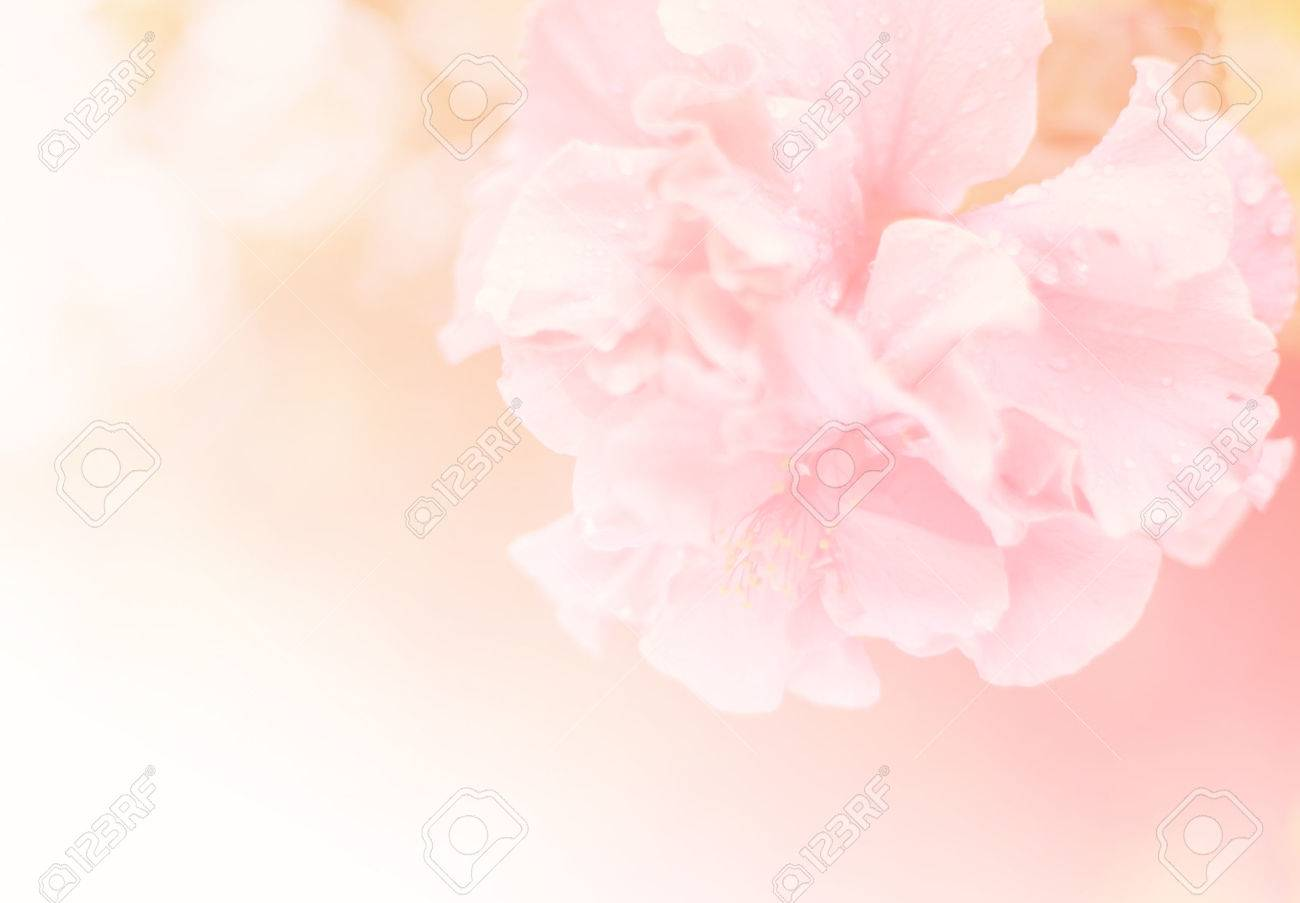 Beautiful Pink Soft Flower Background Nature Background Stock