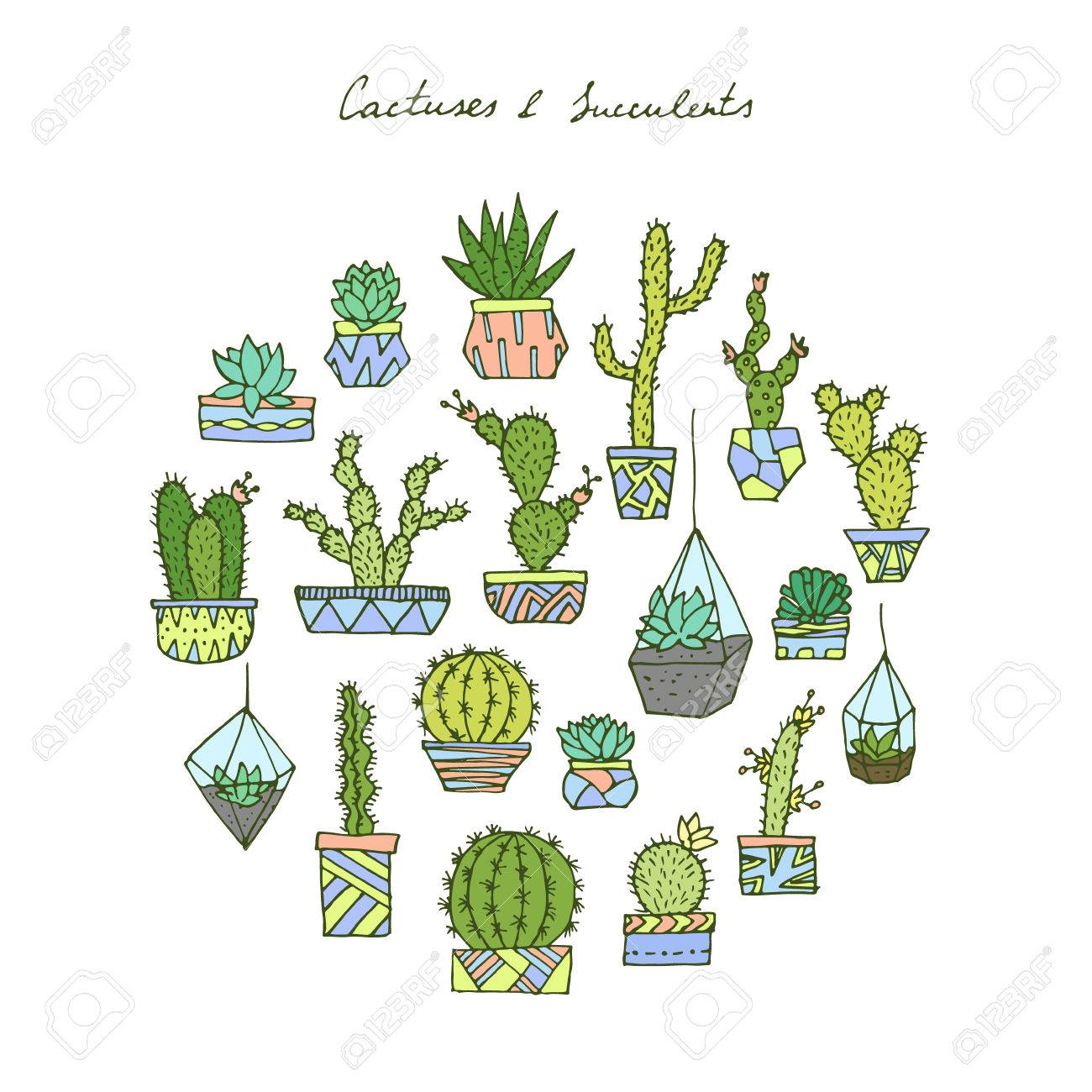 Vector Hand Drawn Cactuses And Succulents Royalty Free Cliparts Vectors And Stock Illustration Image 61952774