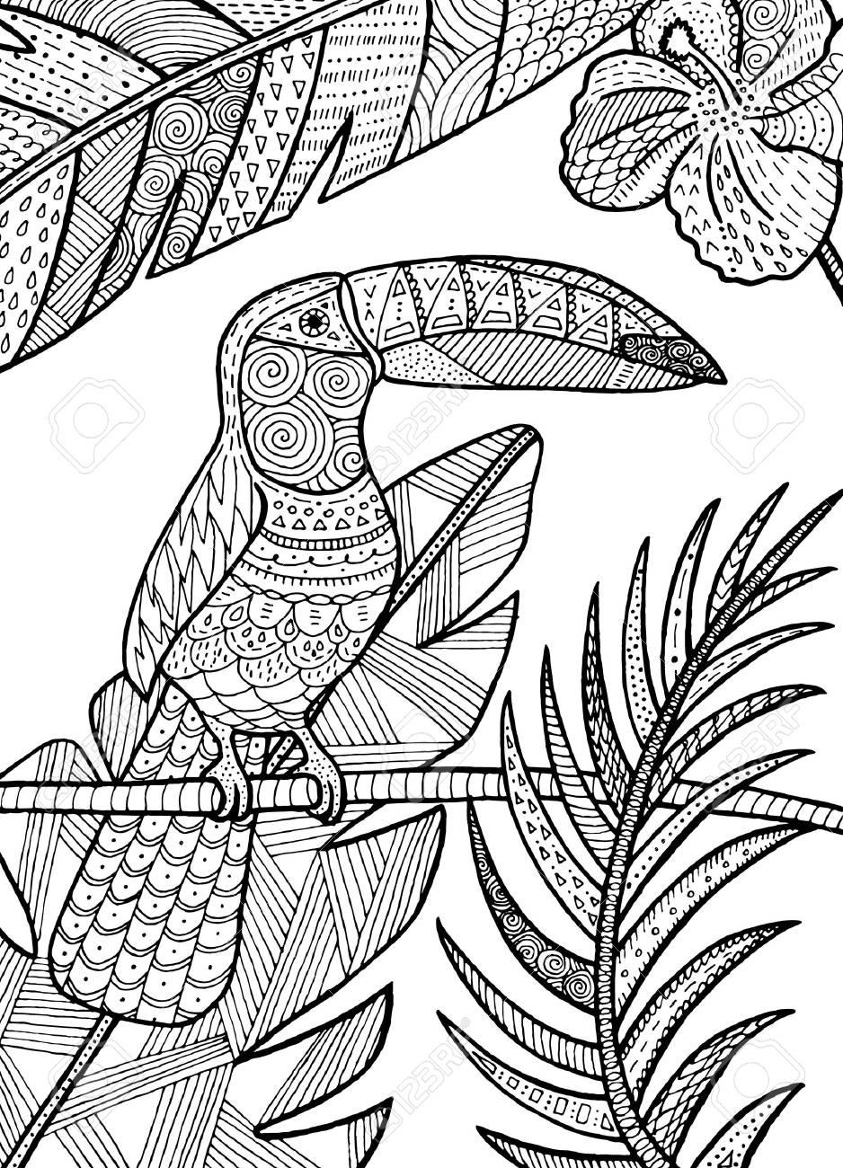 Mano De Vector Dibujado Ilustración Tropical De Aves De Tucán Para ...