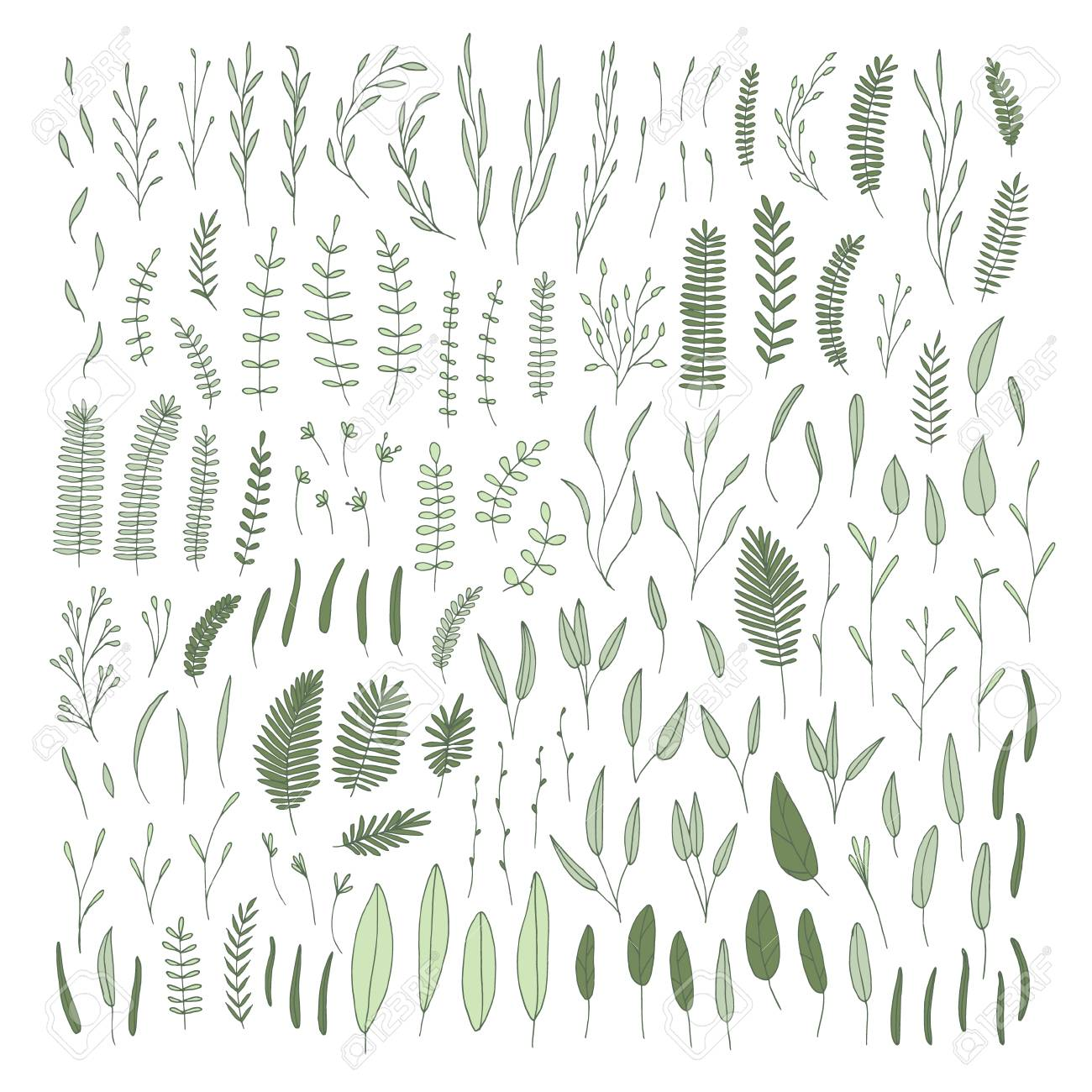 Vector Hand Drawn Collection Of Doodle Leafs And Branches Simple Royalty Free Cliparts Vectors And Stock Illustration Image 112014939