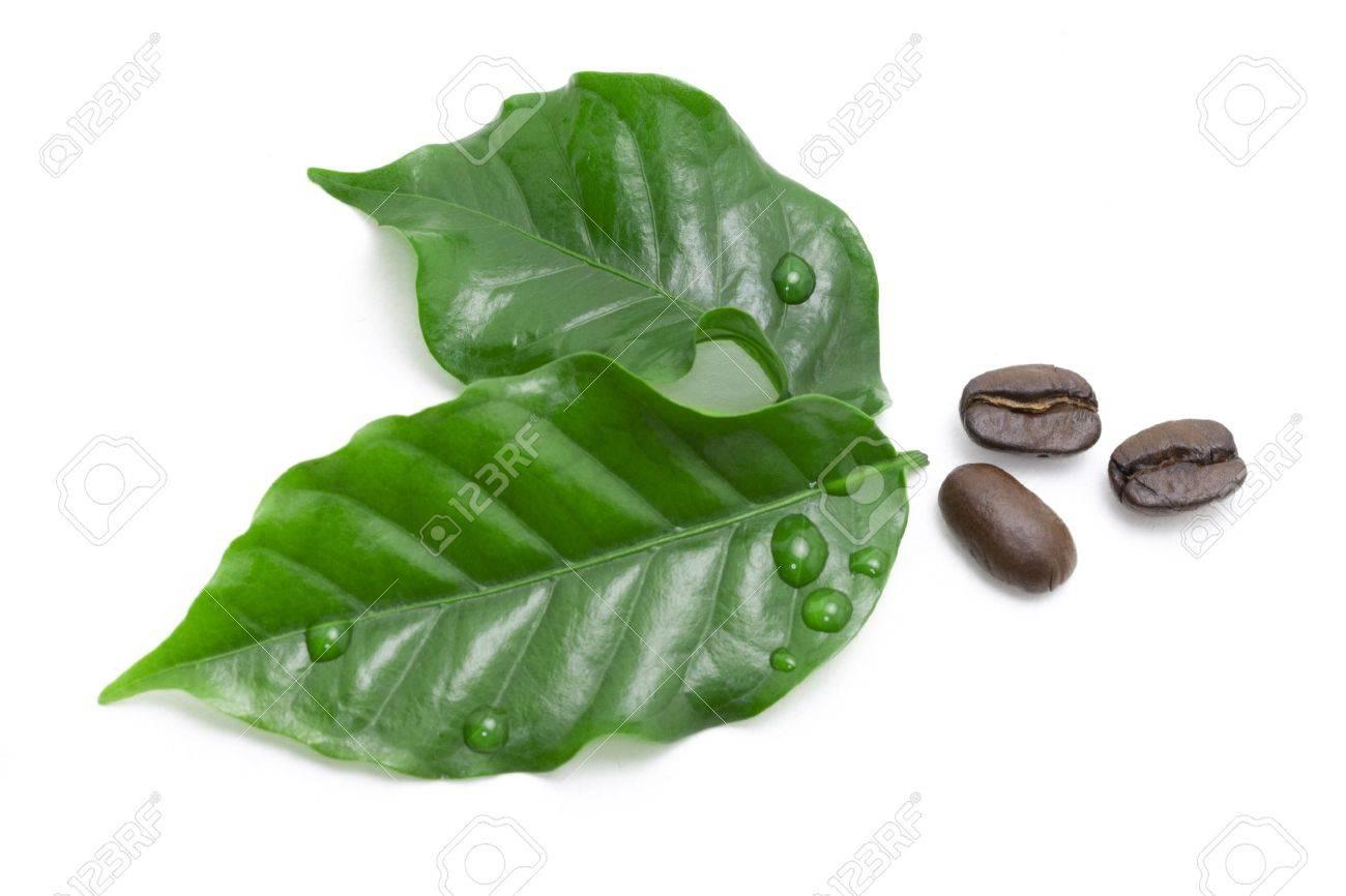 chicchi di caffè verde ita