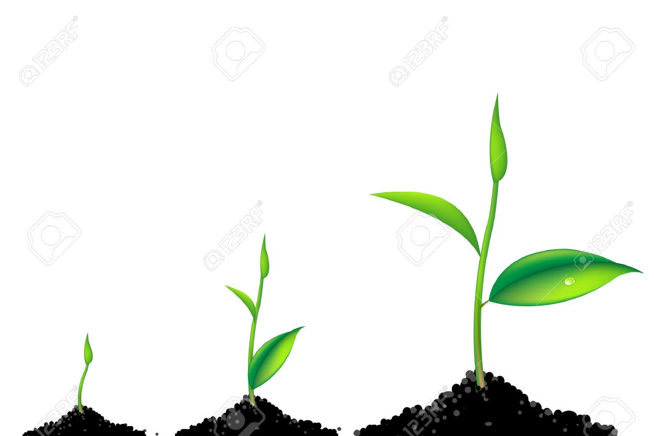 3 Sprouts, Green Young Plant Life Process, Isolated On White Background Stock Vector - 9265870