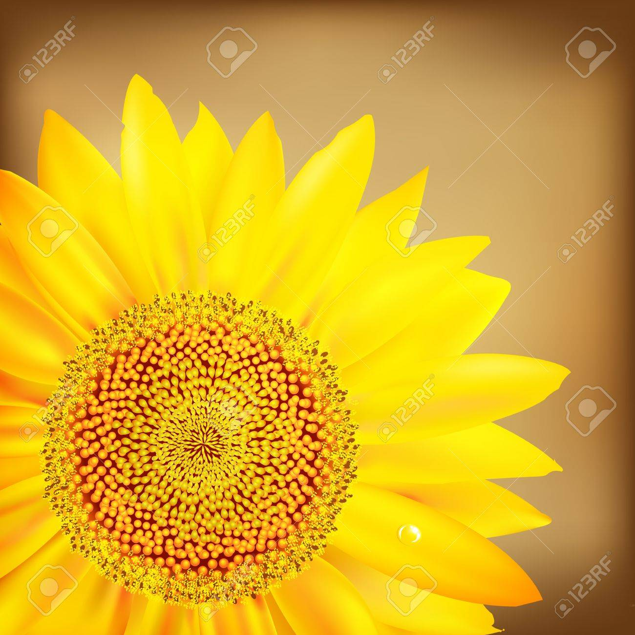 Vintage Sunflower And Old Paper, Vector Illustration Stock Vector - 11349815