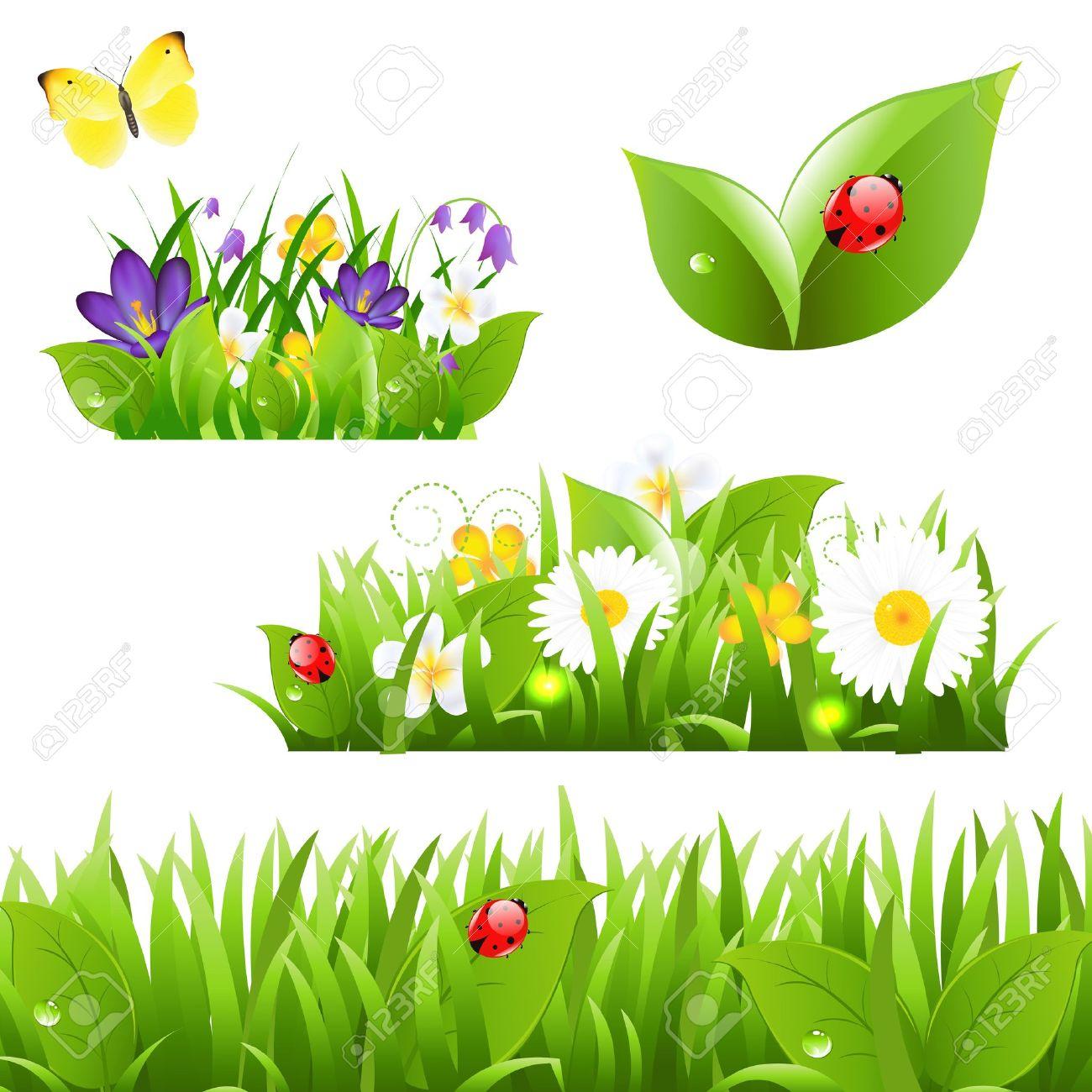 Fleurs Avec Papillon Herbe Et Coccinelle, Isolé Sur Fond Blanc ...