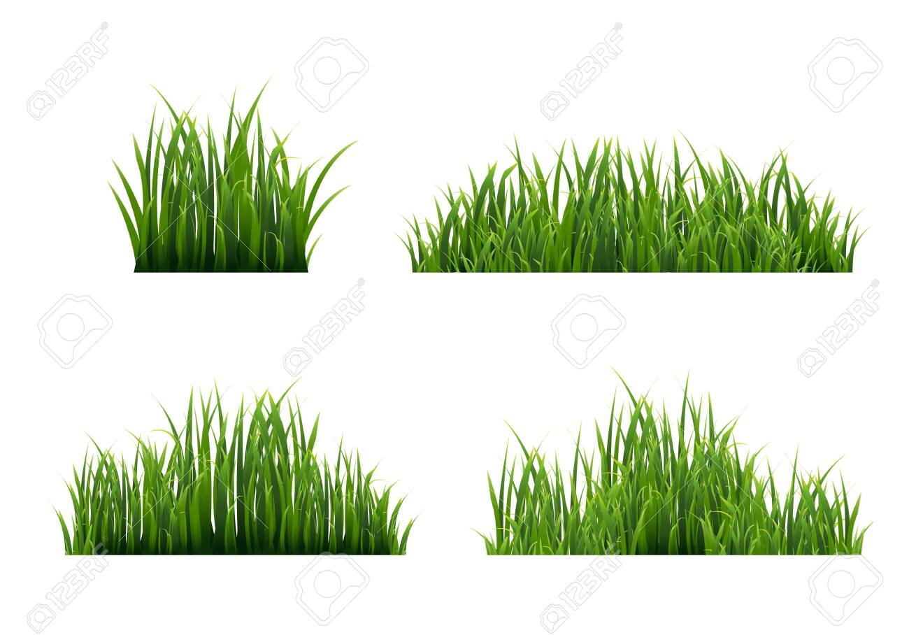 Grass Border With White Background, Vector Illustration - 149797802