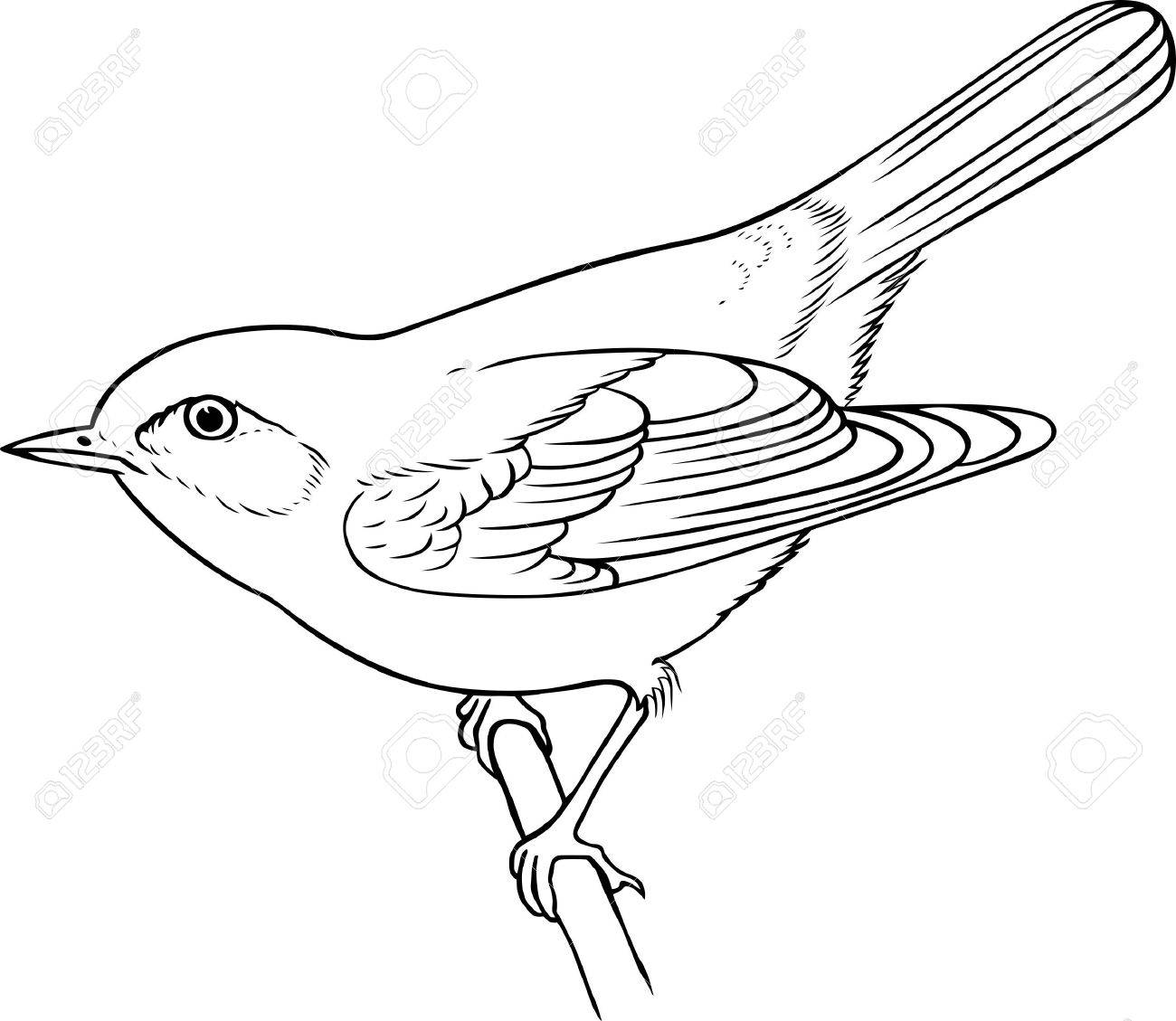 Bird on the branch on white background Stock Vector - 10300439