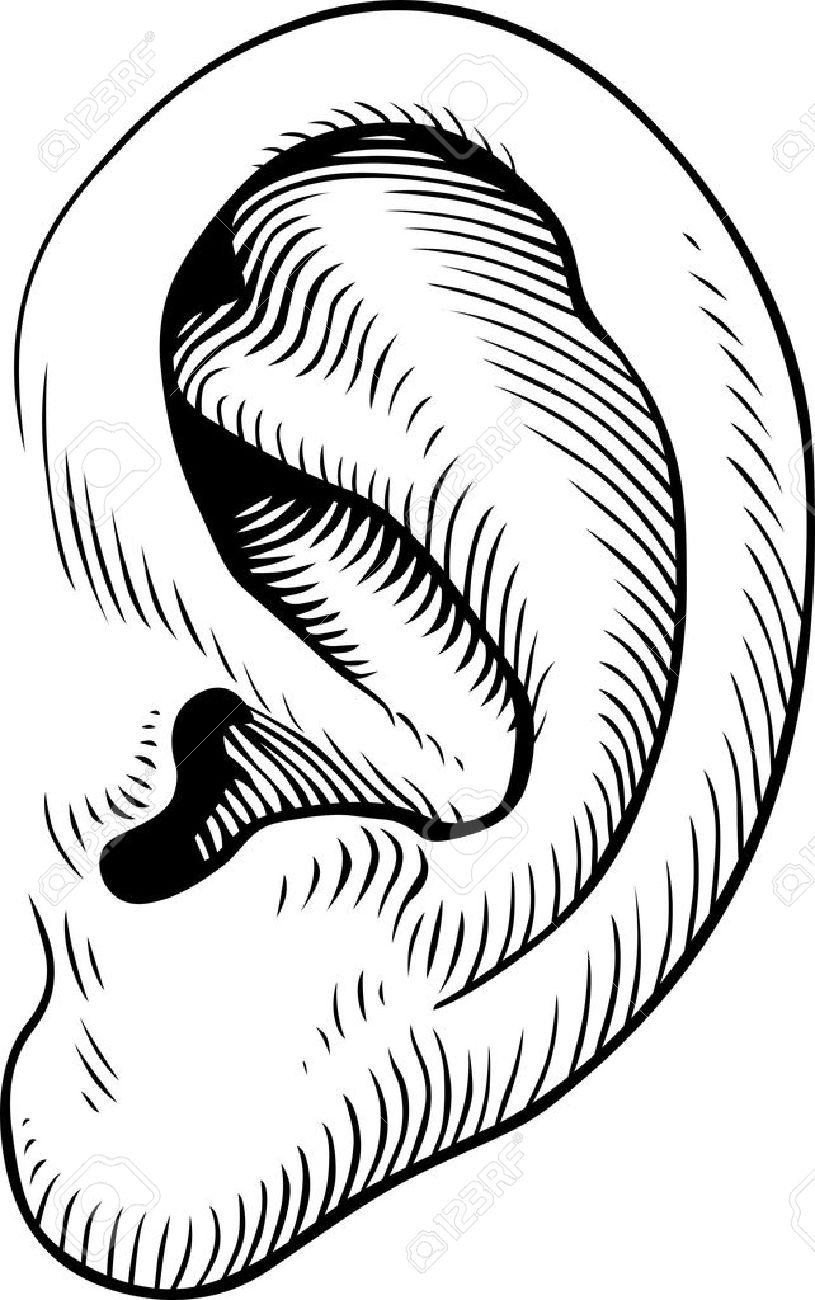 Human ear liste    Clipart  Ear Clip Art Images