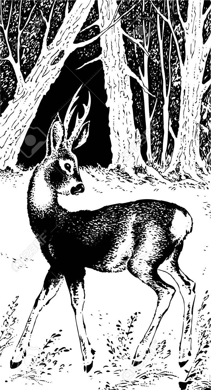 Deer in the forest Stock Vector - 10336137