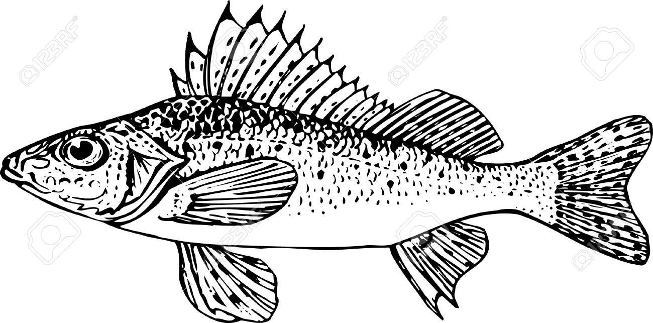 Fish on white Stock Vector - 10397493
