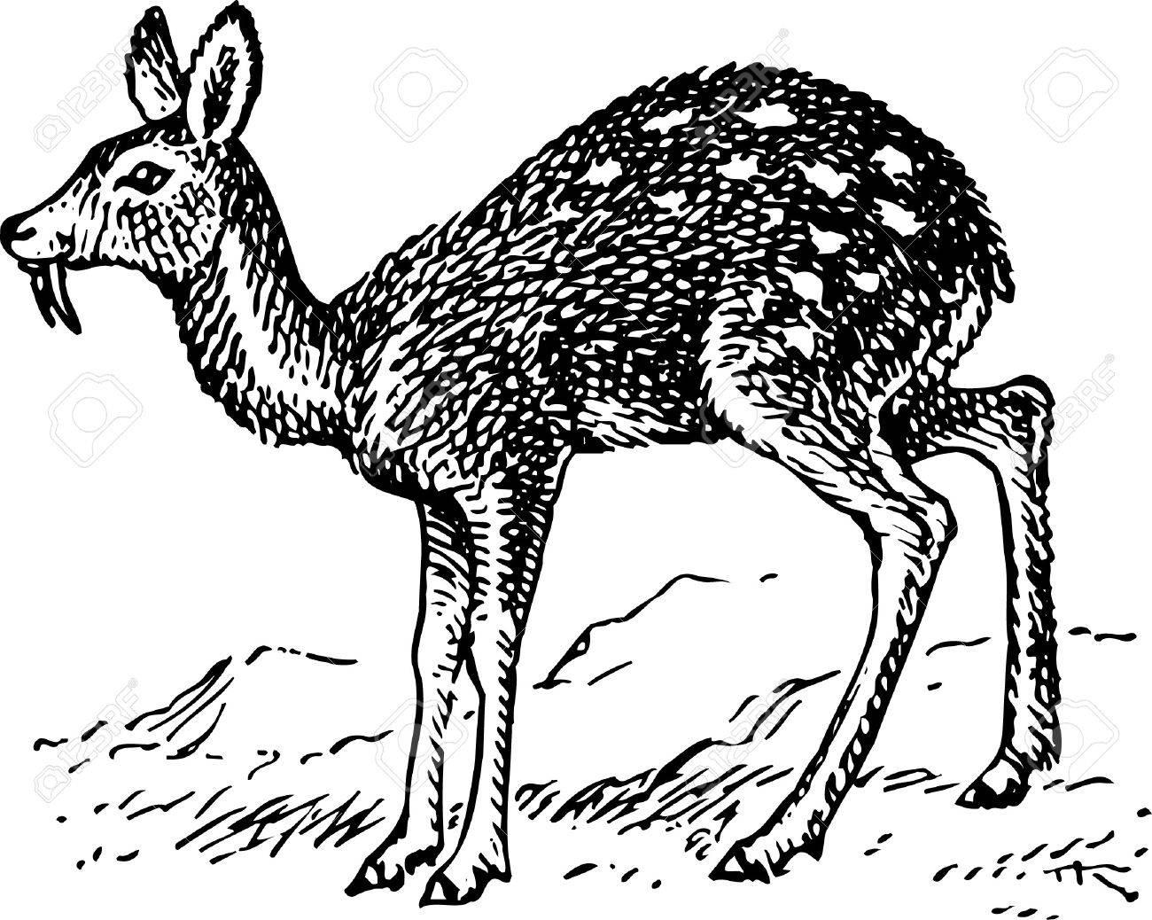 Musk Musk Deer Musk Deer Deer Cartoon