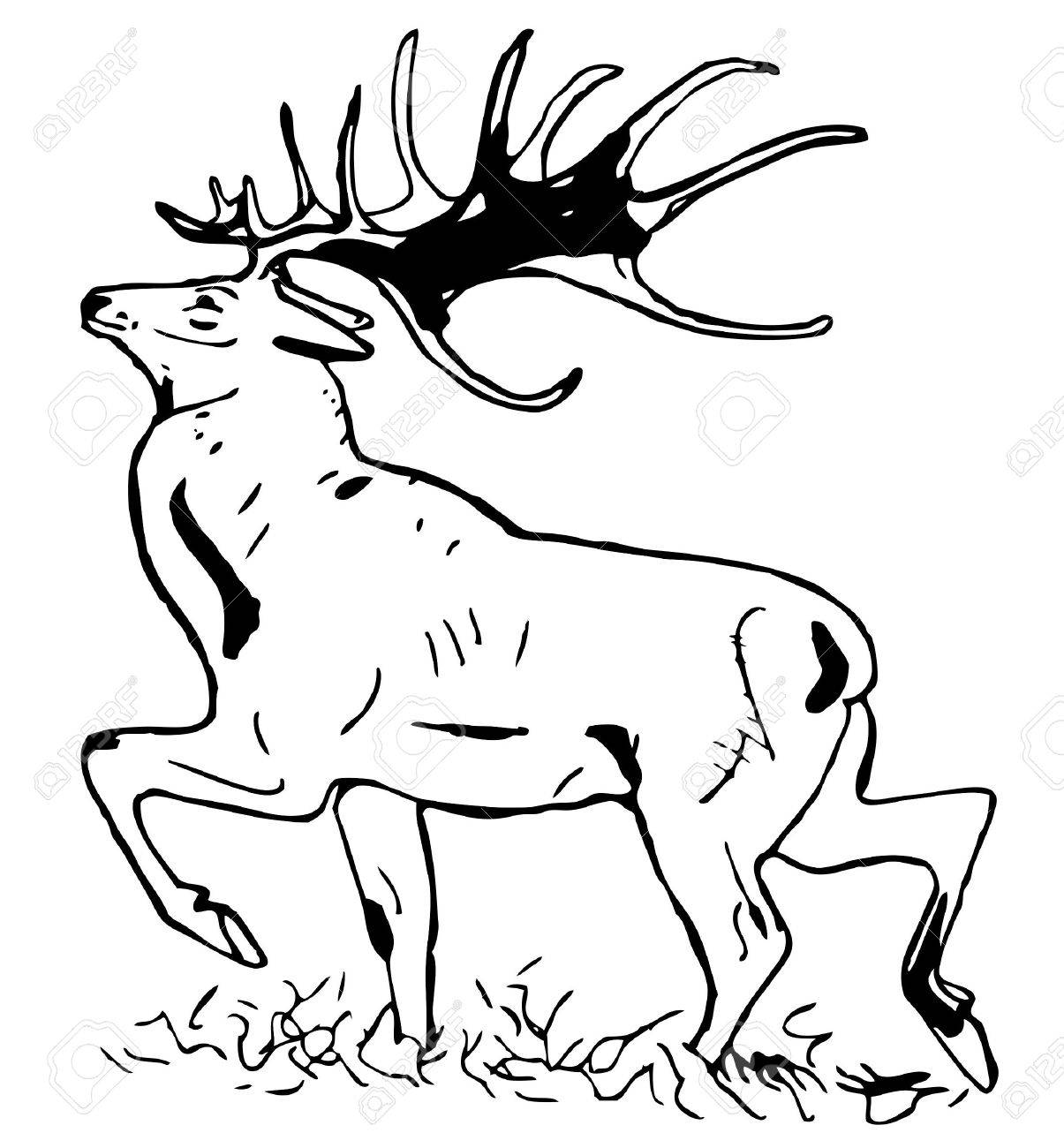 Deer with large antlers Stock Vector - 10402608